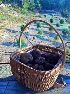 truffes du sud